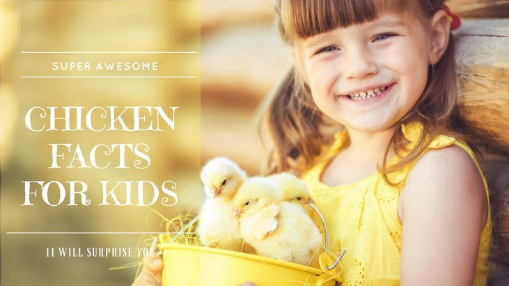 Super Awesome Chicken Facts For Kids (# 11 Will Surprise You!)